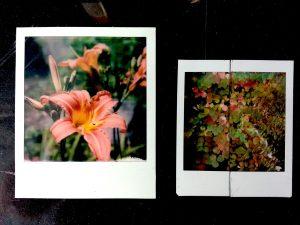 formato-polaroid-e-fake-del-futuro-instax-square-fonte New55 Film
